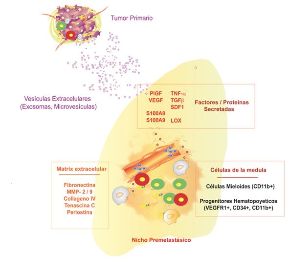 Figura 1 biotecnologia Hector Peinado