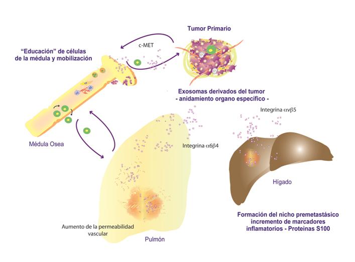 Figura 2 Peinado biotecnología